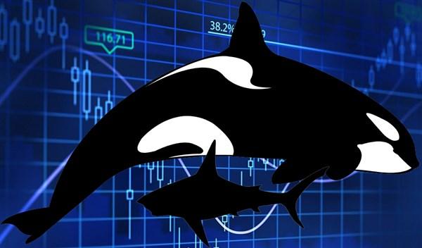 Fiquem espertos com as baleias e os tubarões no mercado de criptomoedas: muitas vezes, eles adoram manipular o mercado.